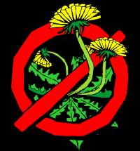 mesa-az-weed-removal
